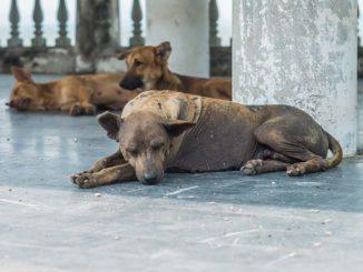 Der er konstateret flere tilfælde af rabies i Thailand. Rabies kaldes også hundegalskab. Rabies skyldes infektion med et virus, som overføres ved bid fra smittede dyr. Rabies kan føre til dødelig hjernebetændelse.